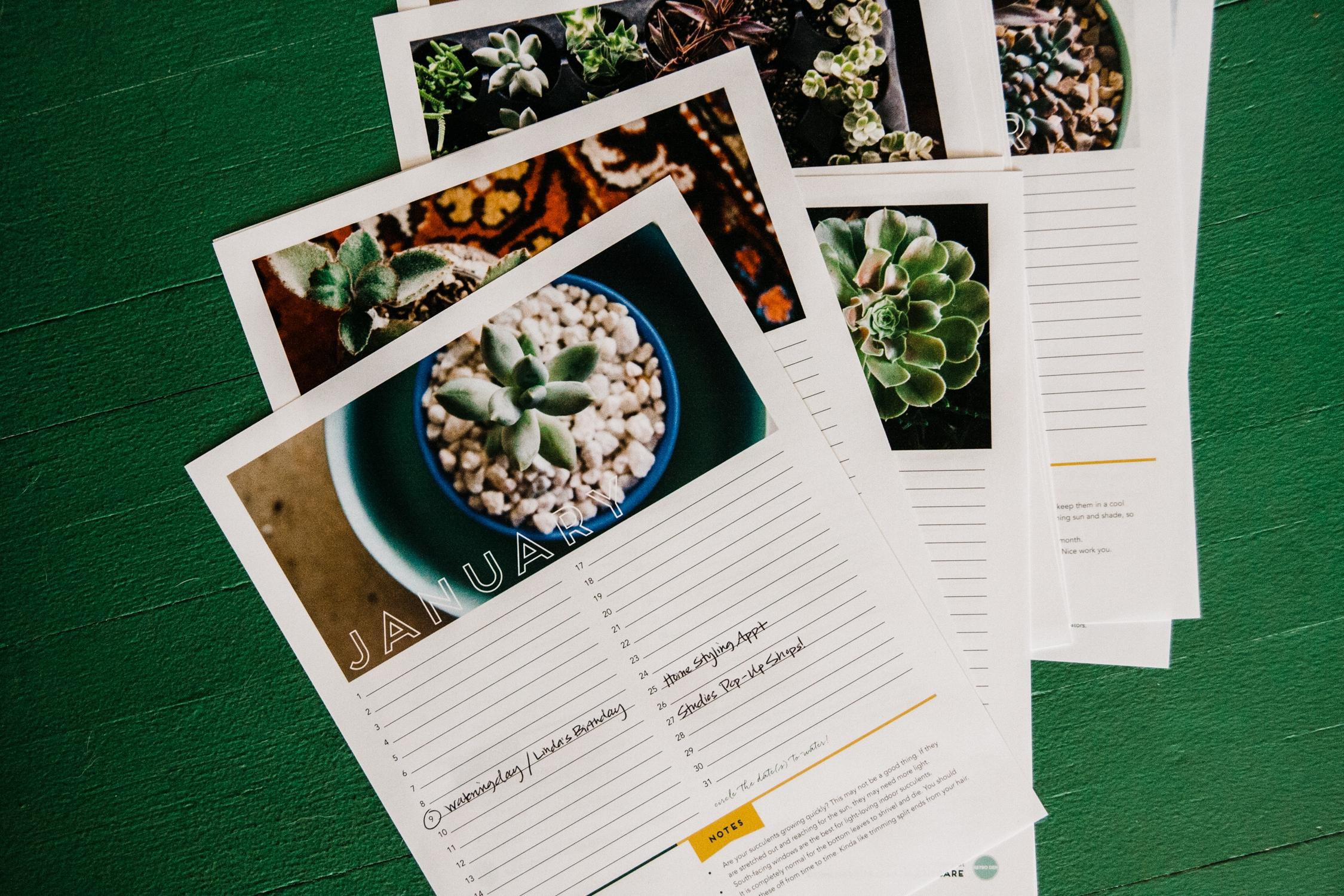 Succulent Care Agenda & Calendar - Become an expert in 12 months!