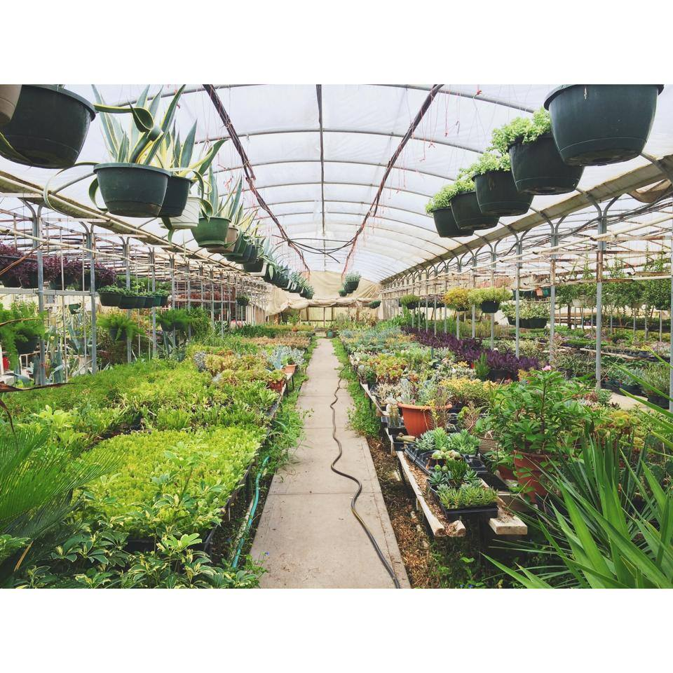 Succulent Green House Tour! - Join us for a field trip to a succulent sanctuary; enjoy wholesale pricing, picnic lunch & more!