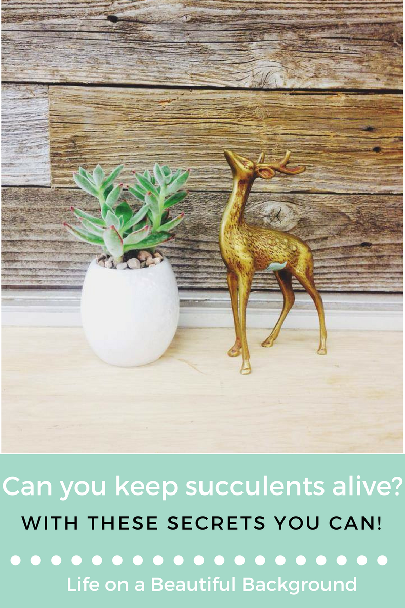 how to care for a succulent.png