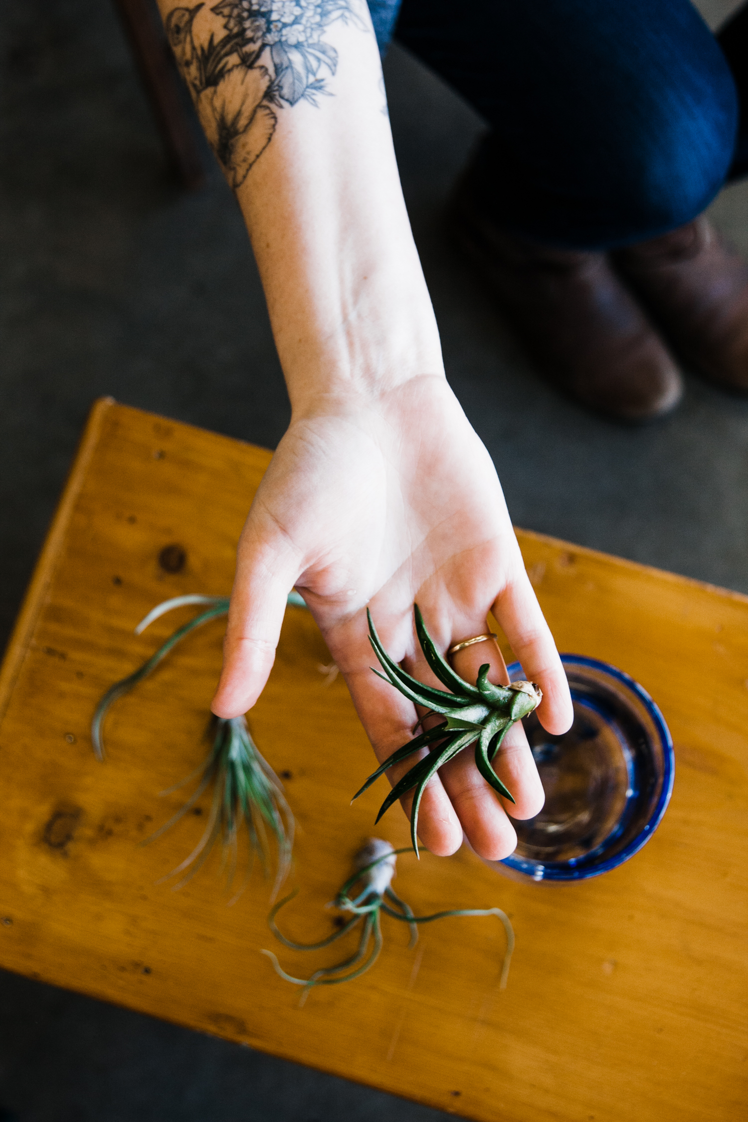 airplants-blog-2.jpg