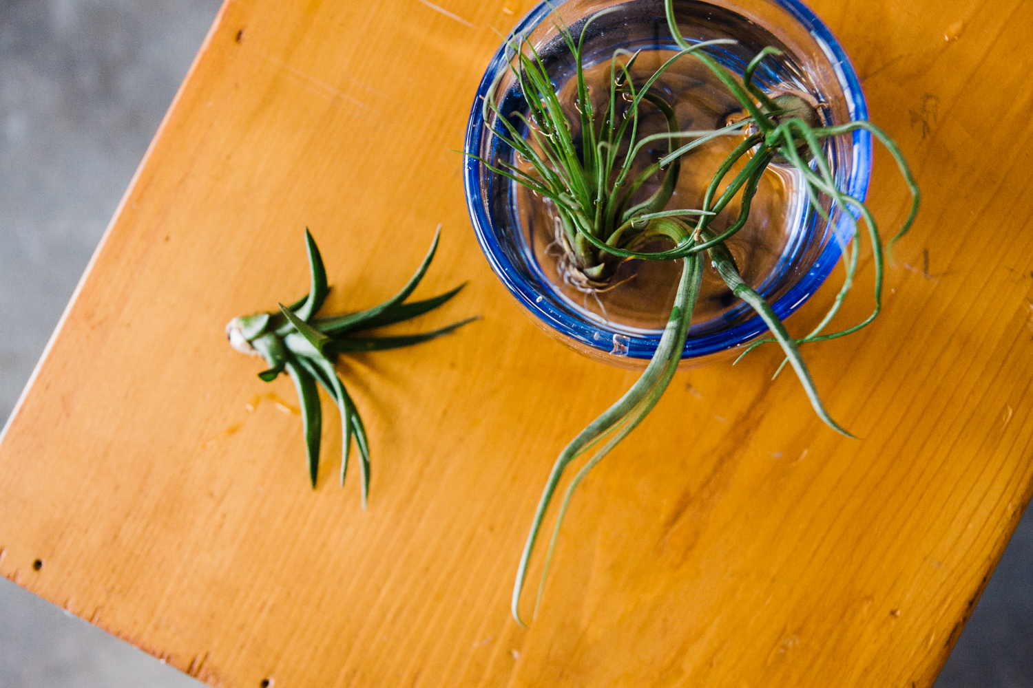 airplants-blog-5.jpg