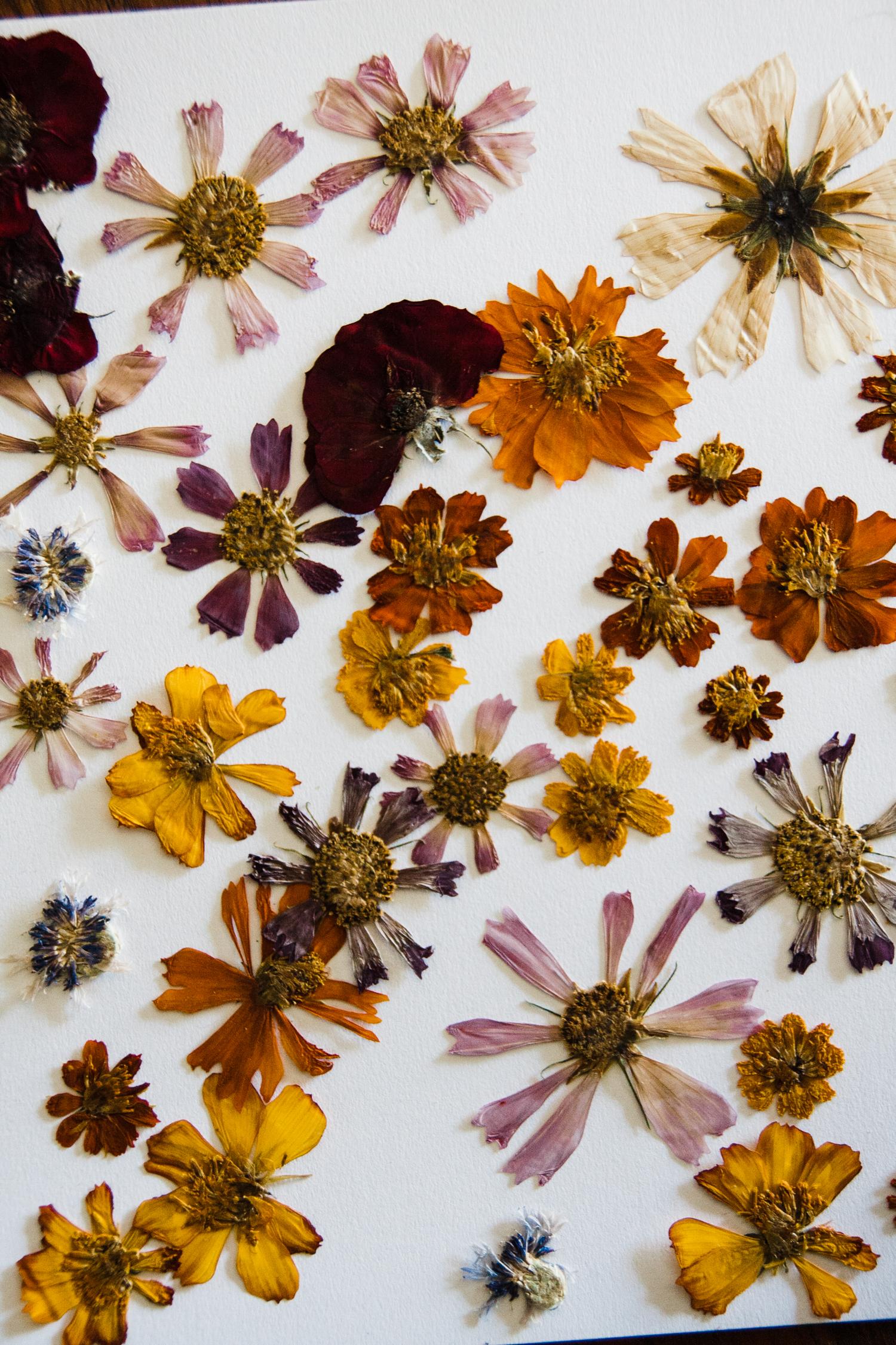 pressed-flower-art-BLOG-24.jpg