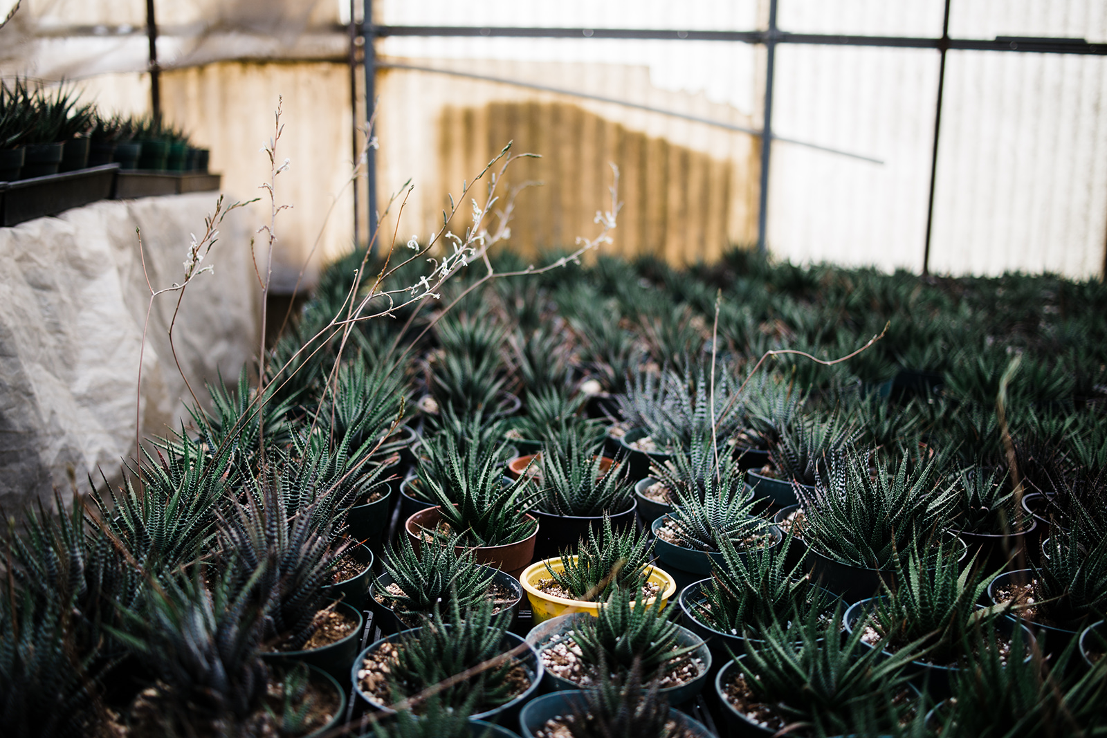succulent-propagation.jpg