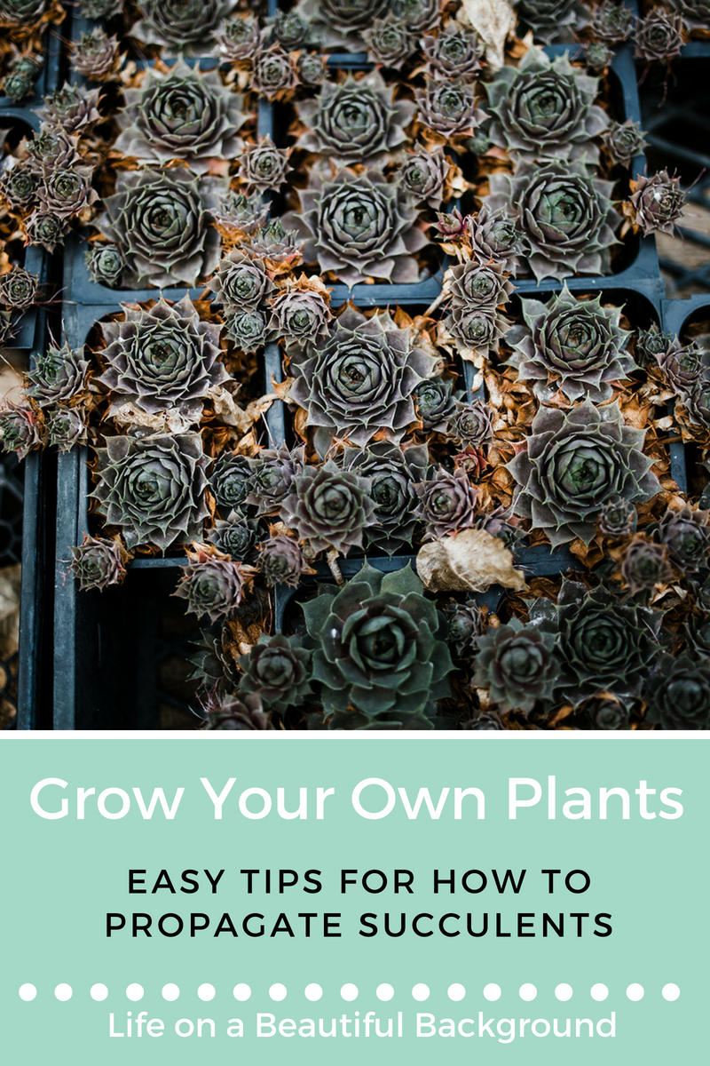 how to propagate succulents.png