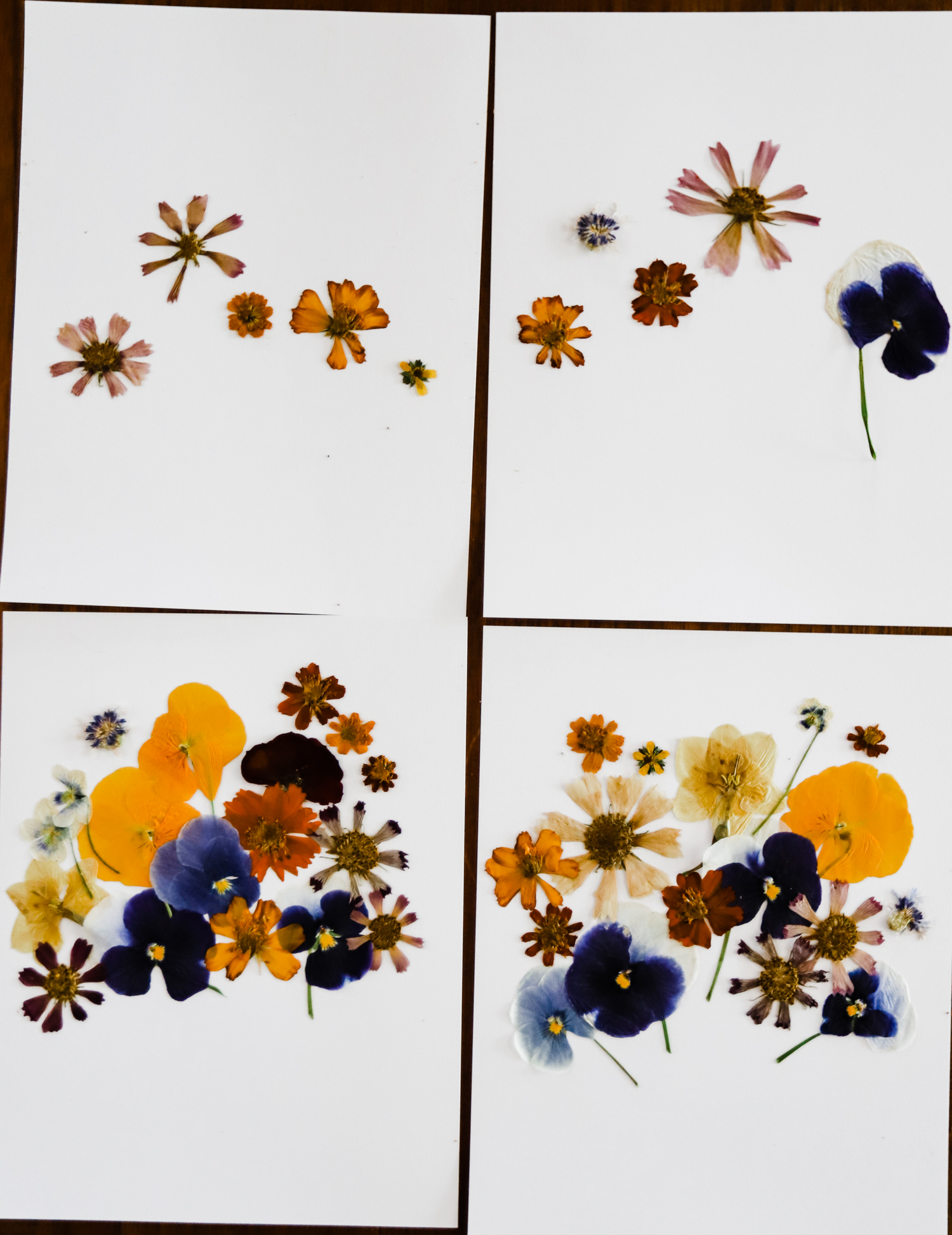 pressed-flower-art-2-WEB-1.jpg