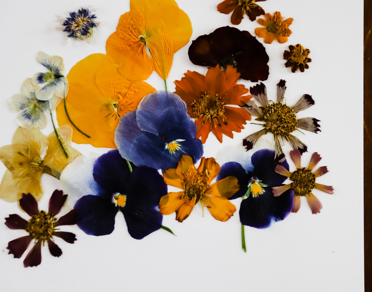 pressed-flower-art-2-WEB-4.jpg