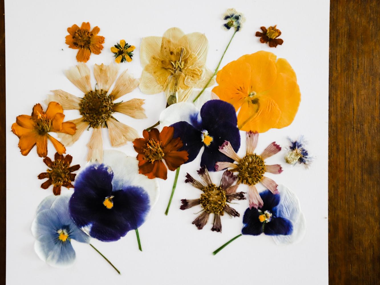 pressed-flower-art-2-WEB-5.jpg
