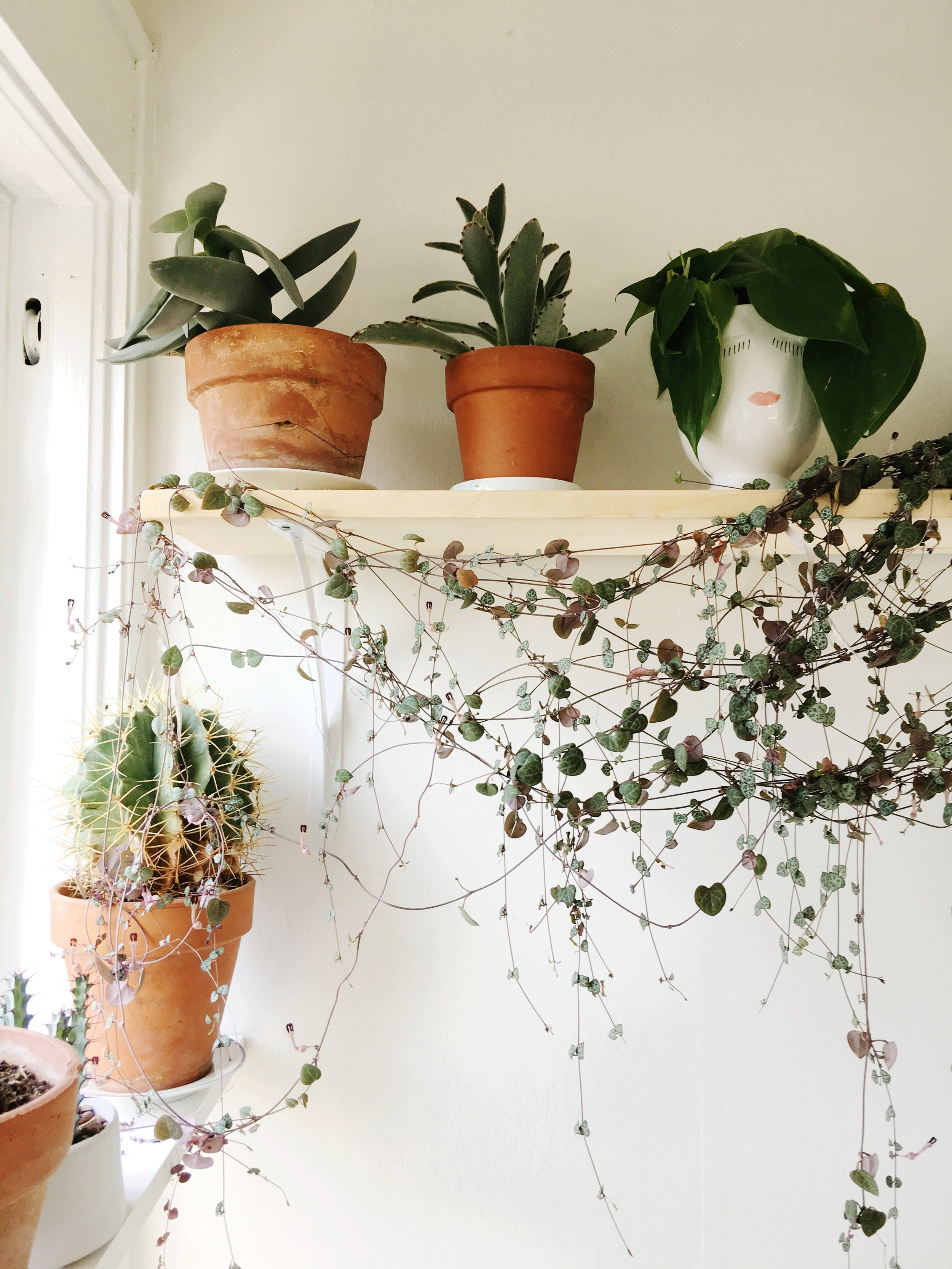 The first plant shelf we ever saw. Memories…