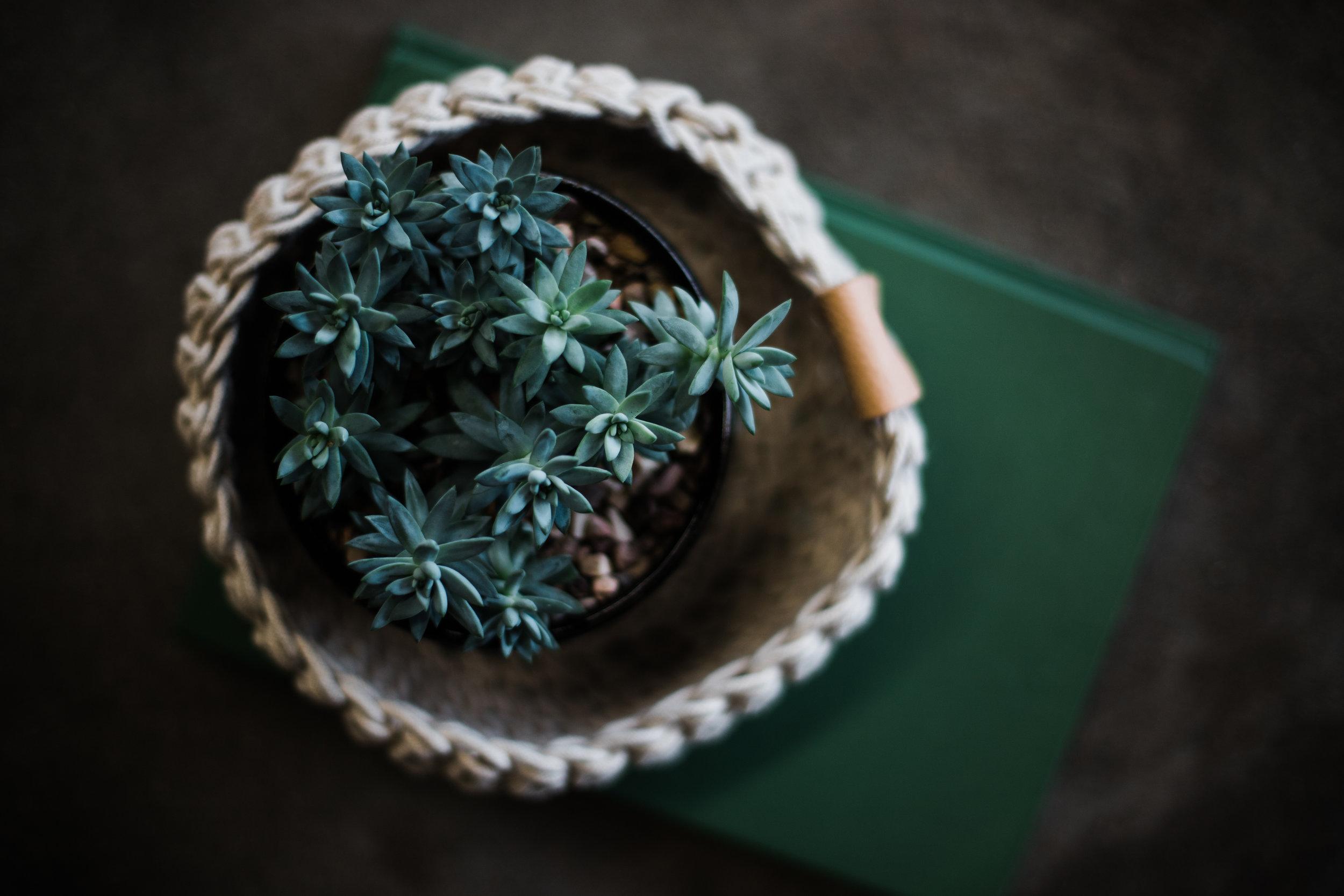 Succulent_calendar_2019-28.jpg
