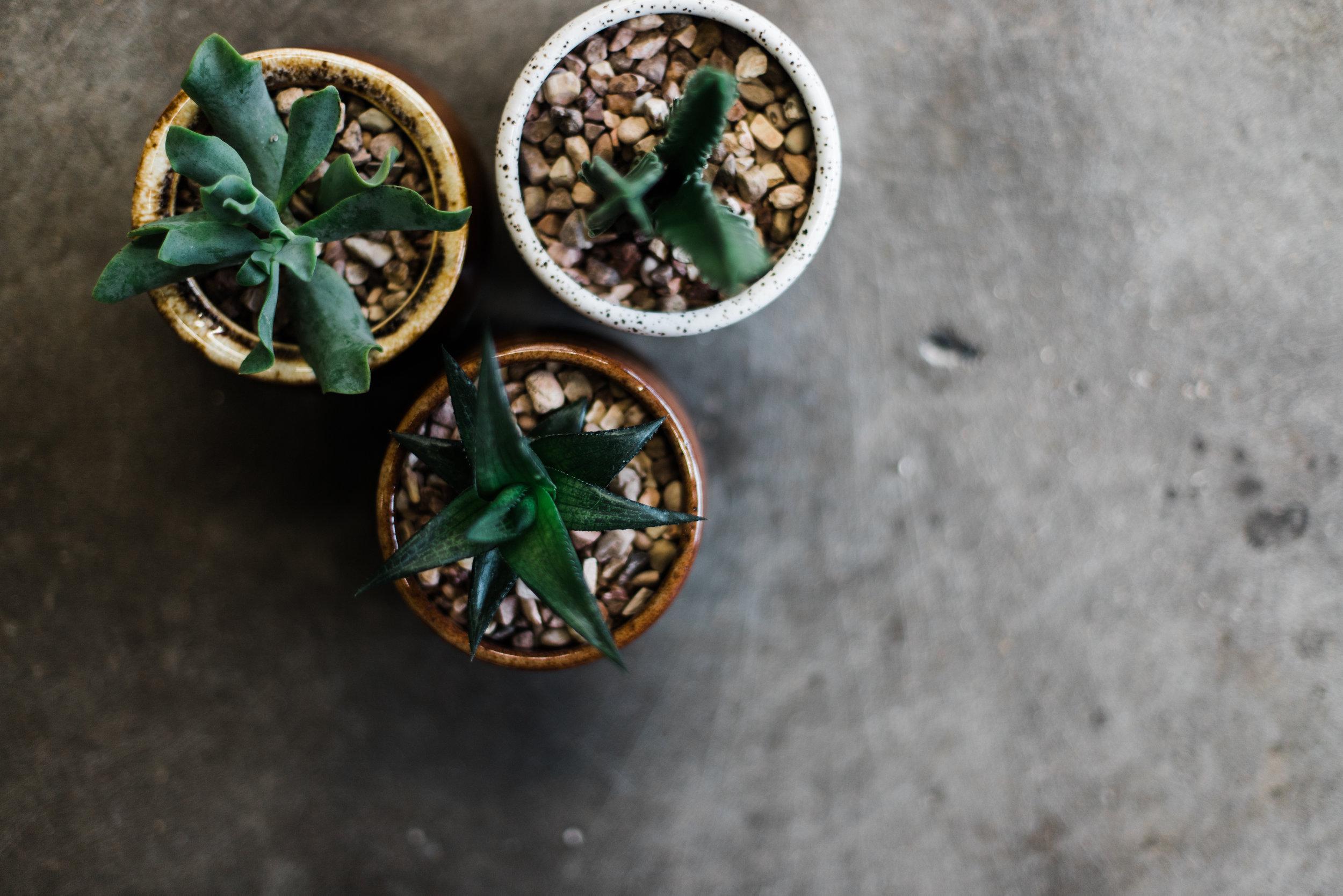 Succulent_calendar_2019-35.jpg