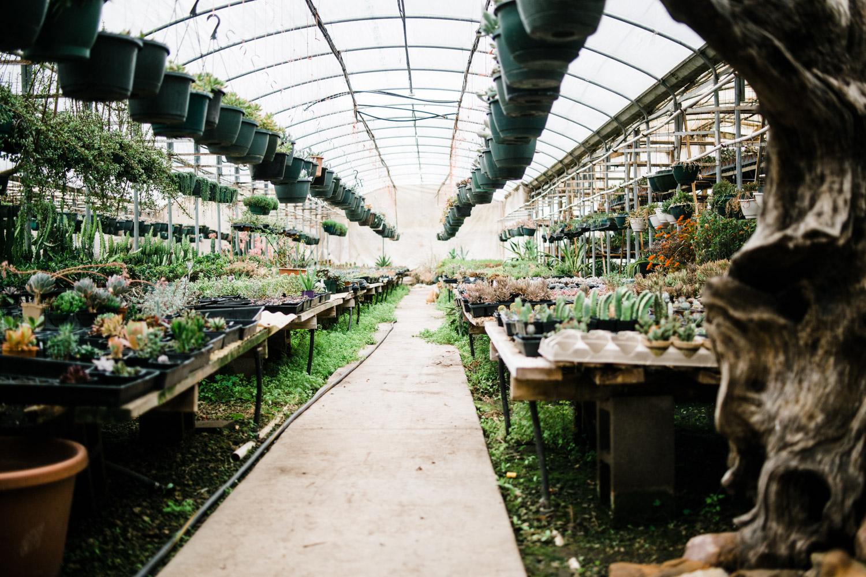 greenhouseweb-0318-0004.jpg