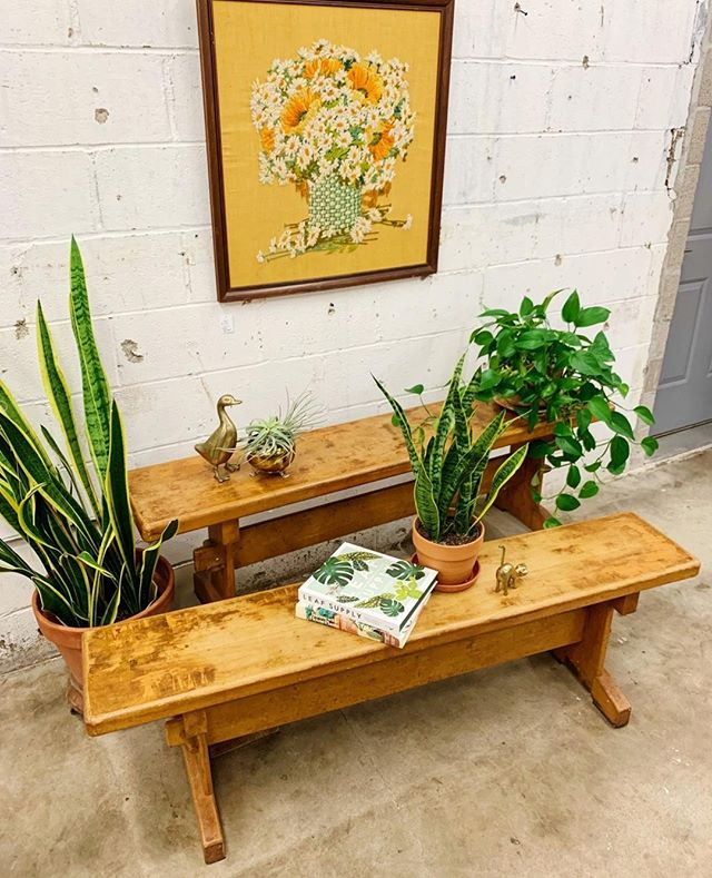 Pretty new benches for your sitting, plant shelfing, whatever way you'd like to use a bench self!⁠ ⁠ ⁠ ⁠ #oklahoma #oklahomablogger #tulsa #tulsaoklahoma #instatulsa #vintagetulsa #tulsavintage #shoptulsa⁠ #retroden #retrodentulsa #rdathome #lifeonabeautifulbackground #oldplusnew⁠ #shoptulsafirst #tulsashopping #shoplocaltulsa #shopsmalltulsa⁠