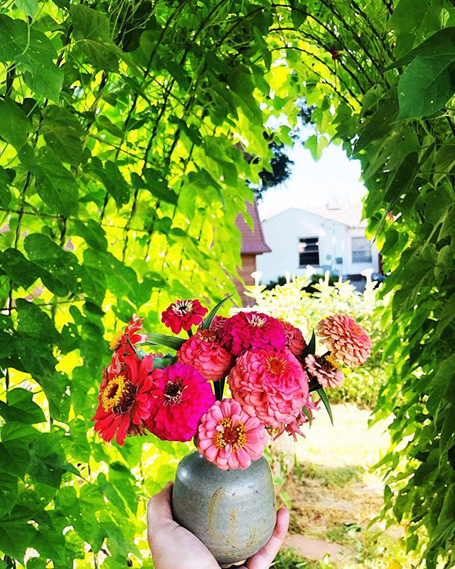 So much peace in looking at flowers. There is something about putting beauty and inspiration in your own path. Do you do that for yourself? How?  #ayearinflowers #tulsa #tulsablogger #tulsagardens #tulsagardening #zinnia #zinnias #dscolor #acolorstory