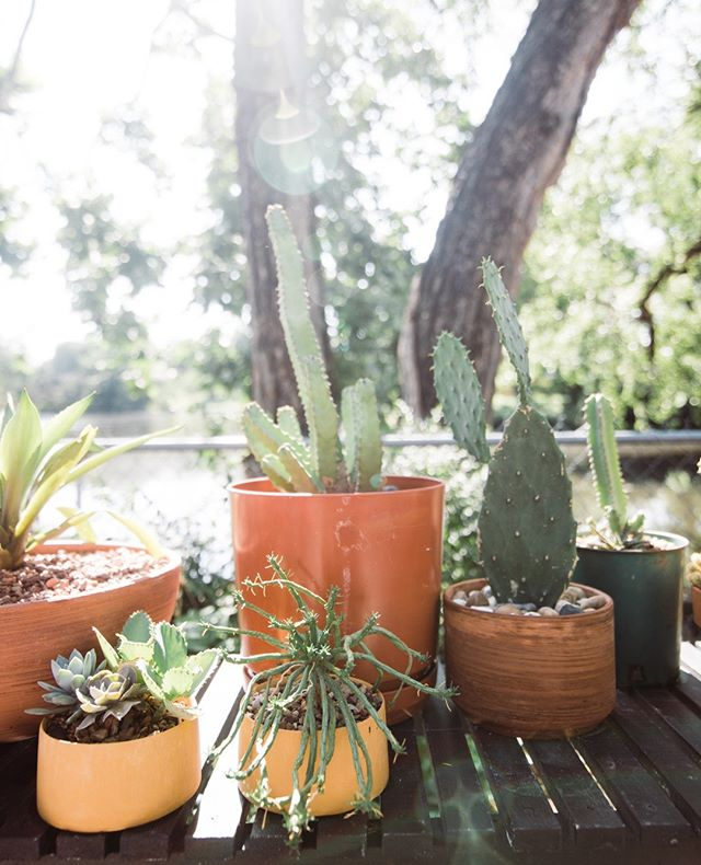 We firmly believe that sunshine and plants inspire us to be our best selves. ⁠ ⁠ And that our best selves deserve a whirl around our shop at 12th & Harvard in Tulsa. ⁠ ⁠ The smiles are always free! #freesmiles ⁠ ⁠ #lifeonabeautifulbackground #rdathome #succulentsofinstagram #plantsofinstagram #cacti #cactus #succulents #plantsmakemehappy #myplantlovinghome #houseplantclub #succulentcollection #succulentcollector #outdoorliving #modernpatio #outdoorspaces #sodomino #designsponge #apartmenttherapy #ggathome #stellarspaces #patio #mydesigndetails #tulsa #instatulsa #igerstulsa #oklahomablogger #tulsablogger #myeclecticmix #pocketofmyhome