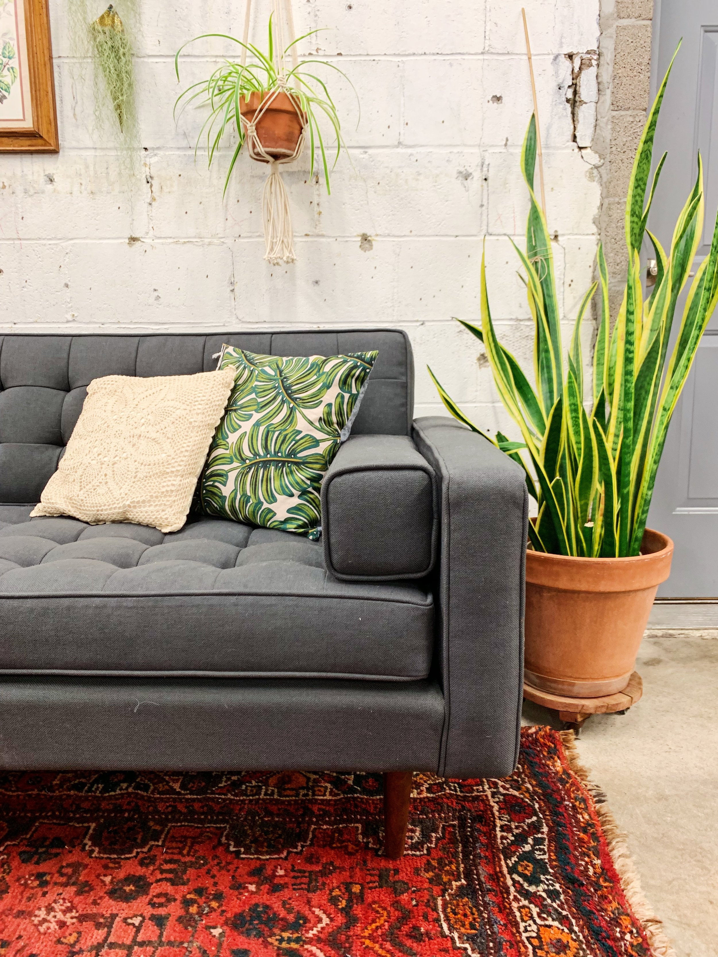 Plant Lady Style Houseplants Tulsa Oklahoma Living Room Furniture Decor Gus Modern