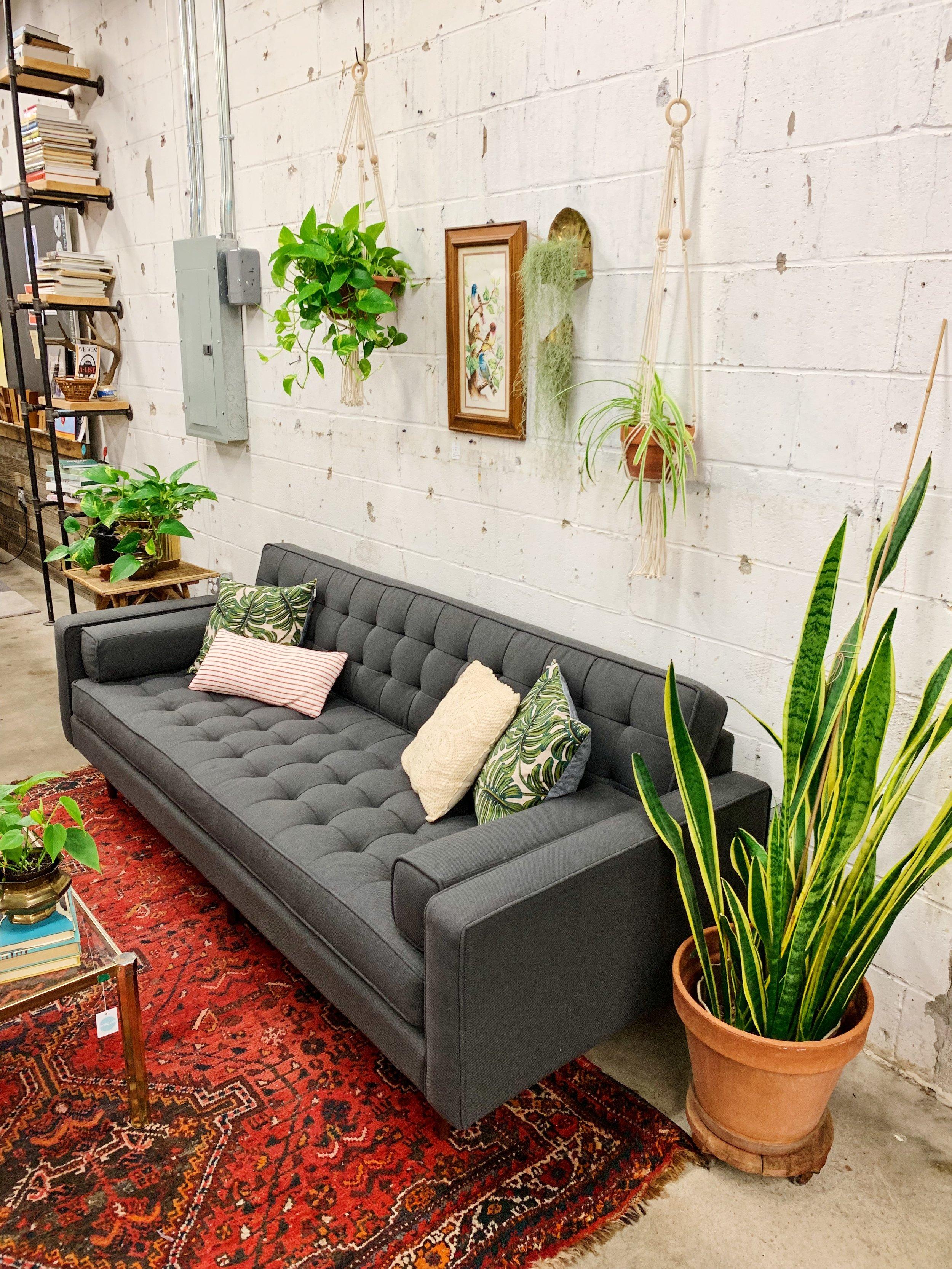 Gus Modern Plant Lady Style Houseplants Tulsa Oklahoma Living Room Furniture Decor