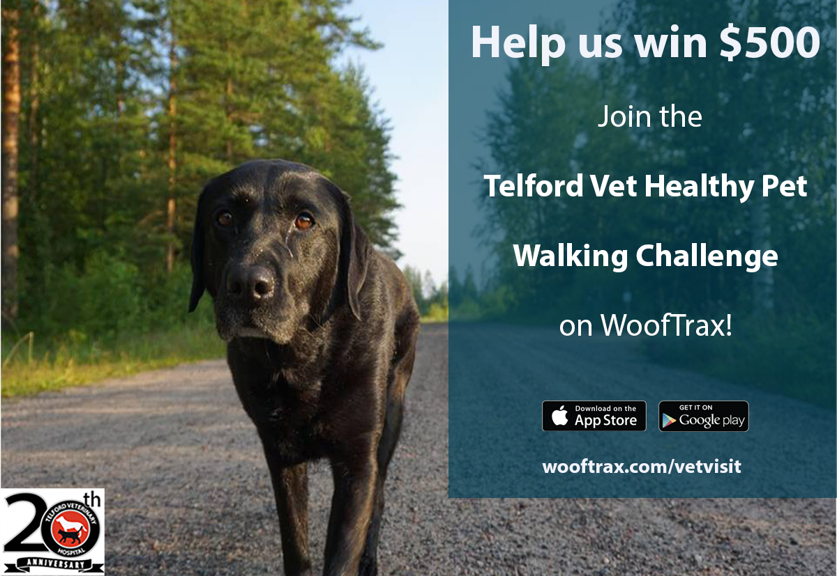 Telford Vet Healthy Pet Challenge  sharing image.