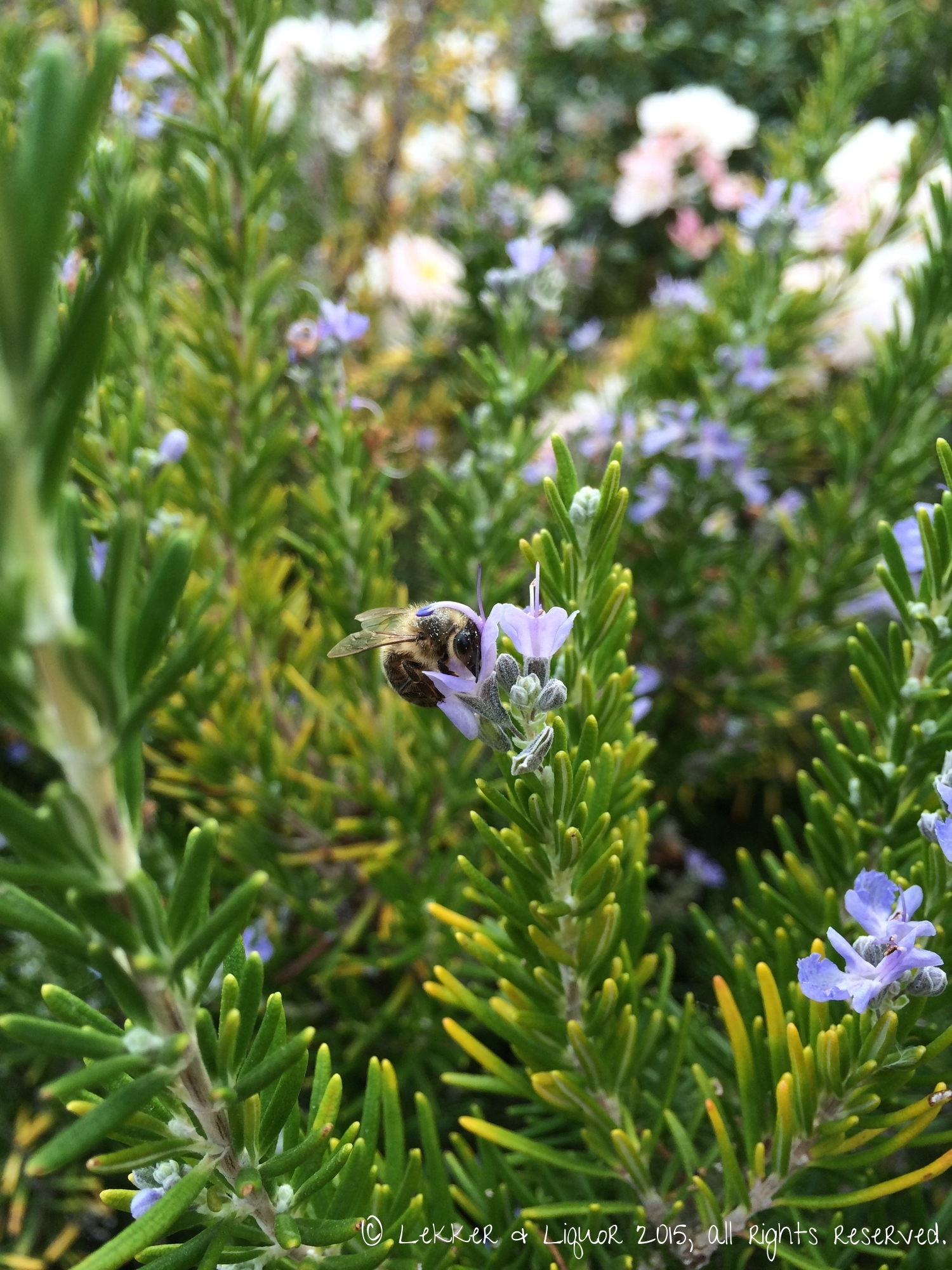 Rosemary left to bloom will attract visitors...