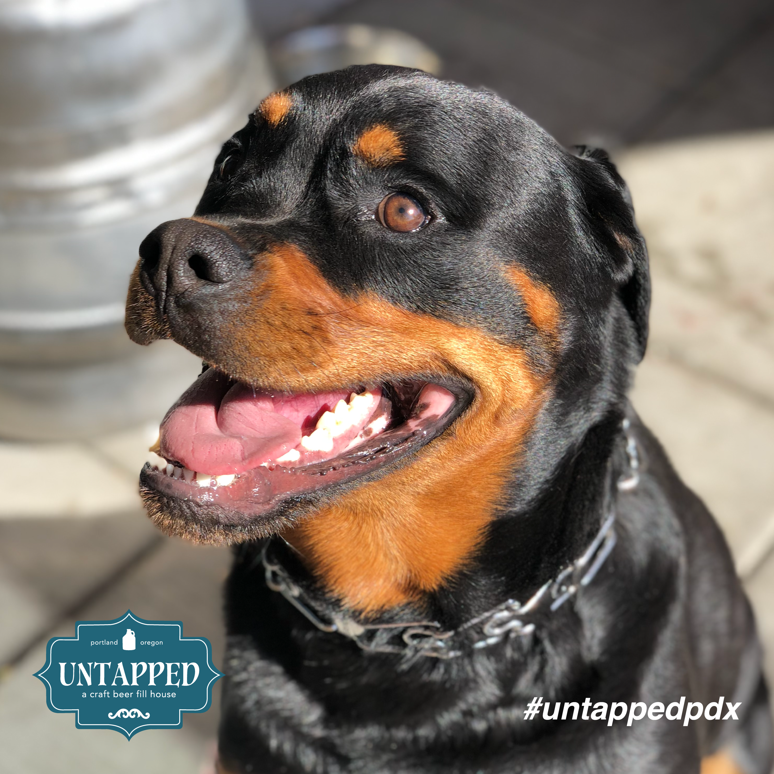 untapped_paws_on_patio_set1-05.png