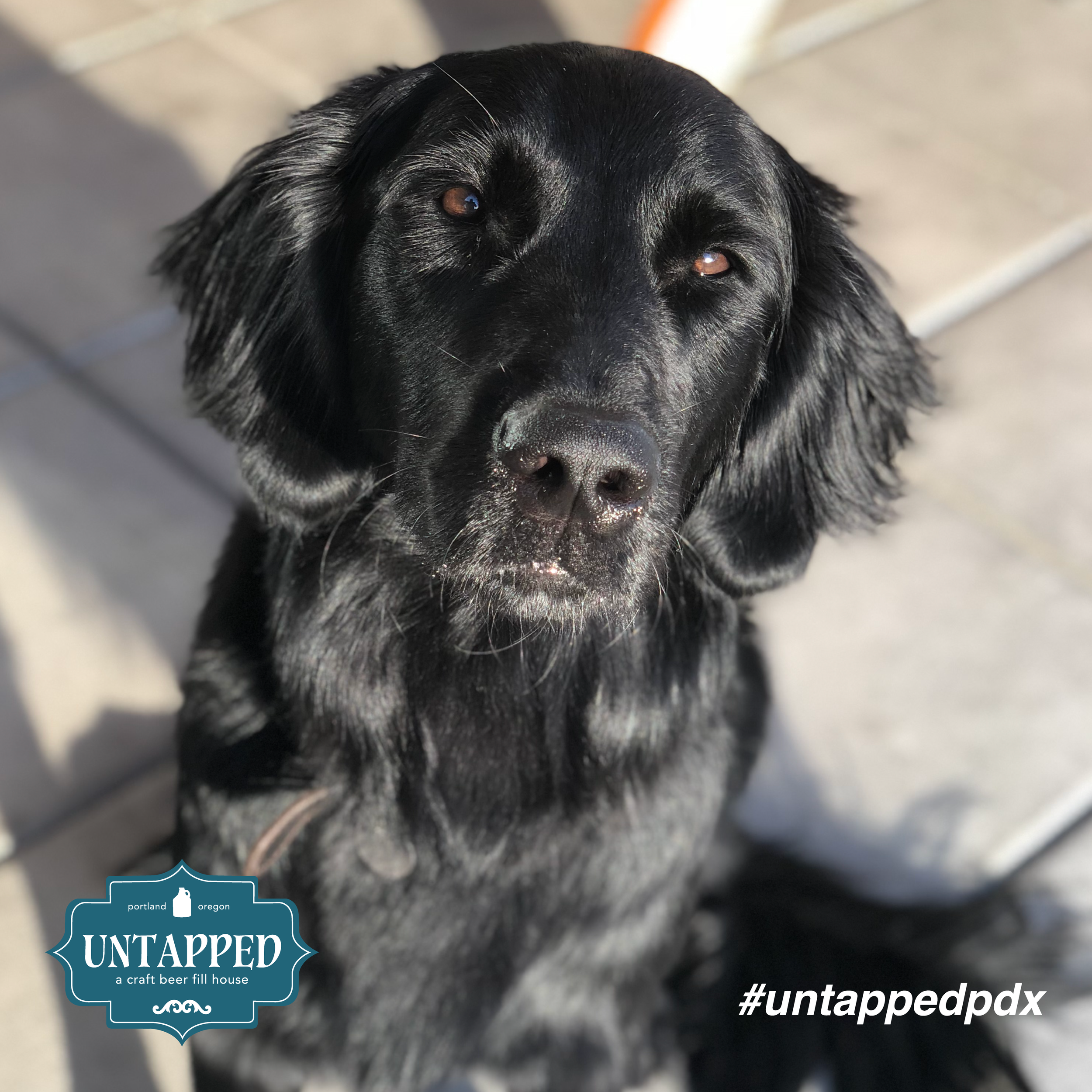 untapped_paws_on_patio_set4-03.png