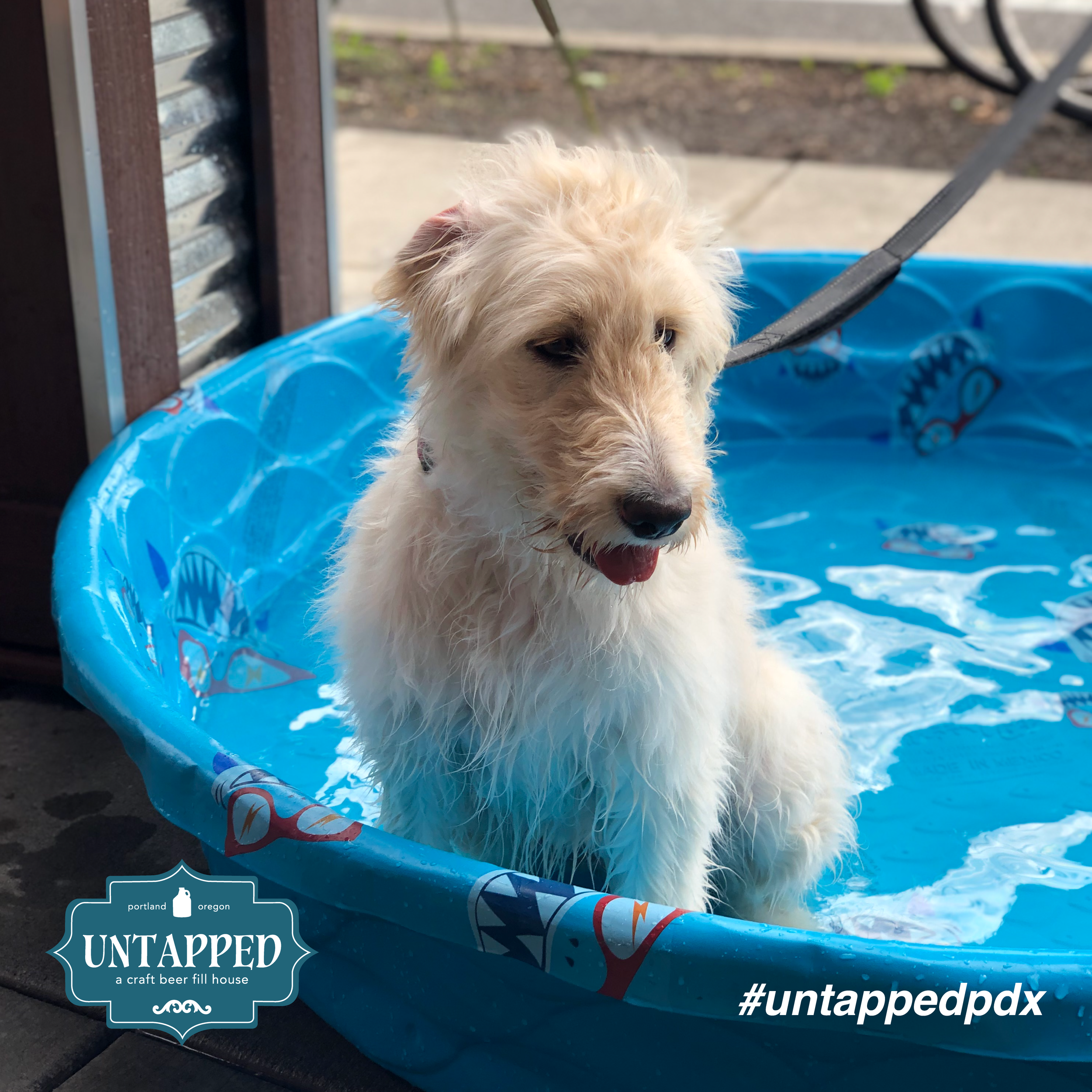 untapped_paws_on_patio_july19-03.png