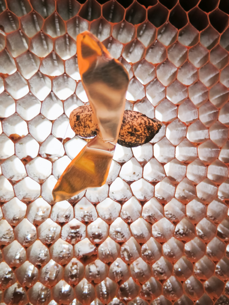 HAYGROUND BEE EXHIBITION.201400013.jpg