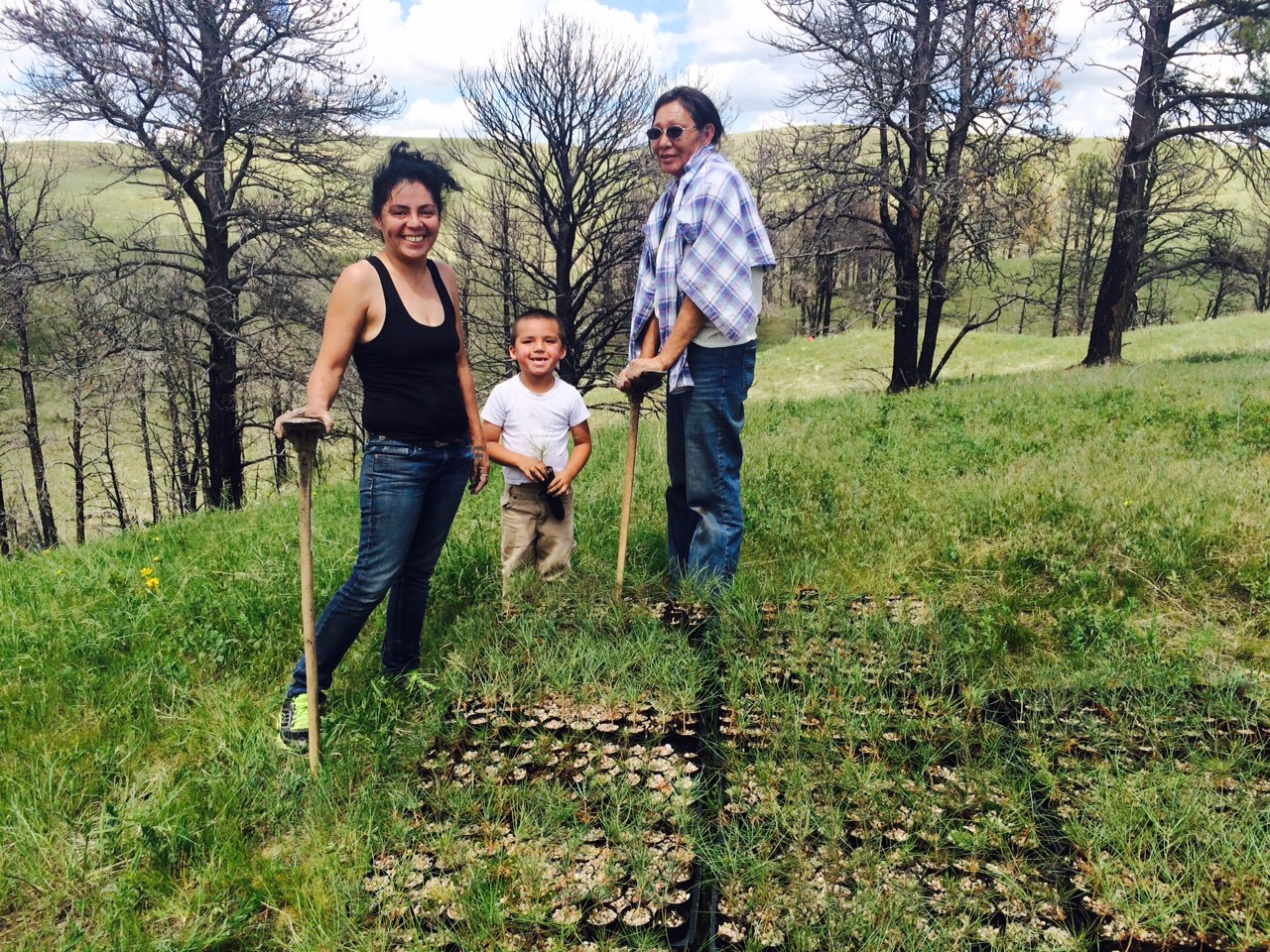 pine ridge reservation reforestation