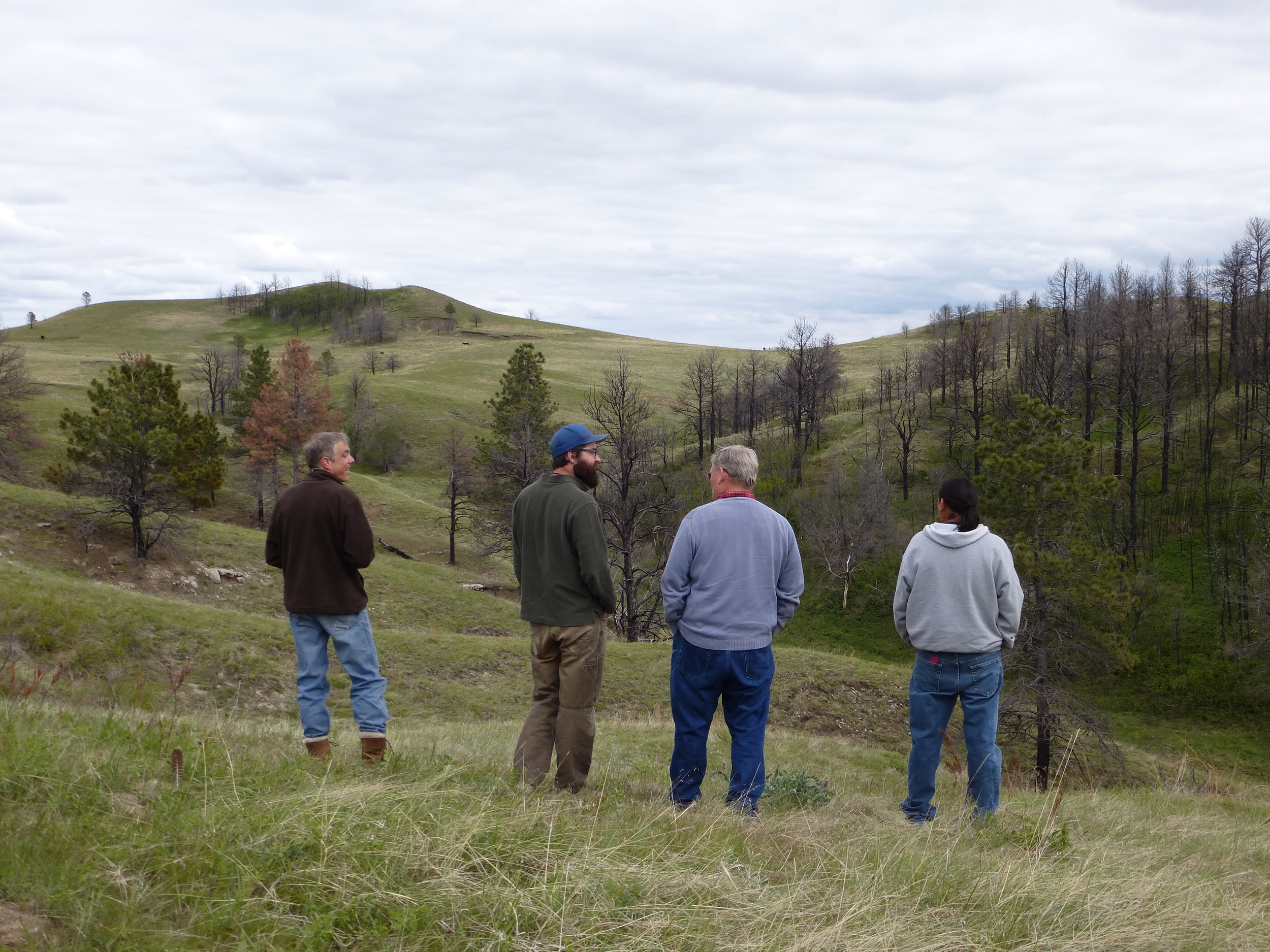 TWP and LSE Staff look out over the area that will soon be reforested with ponderosa pines.