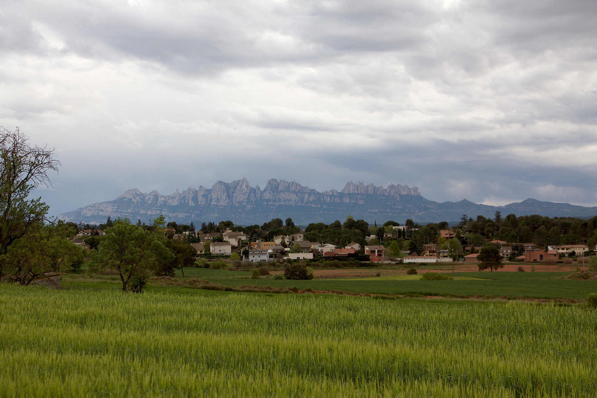 Quail-catching with a view –Monserrat in the distance.