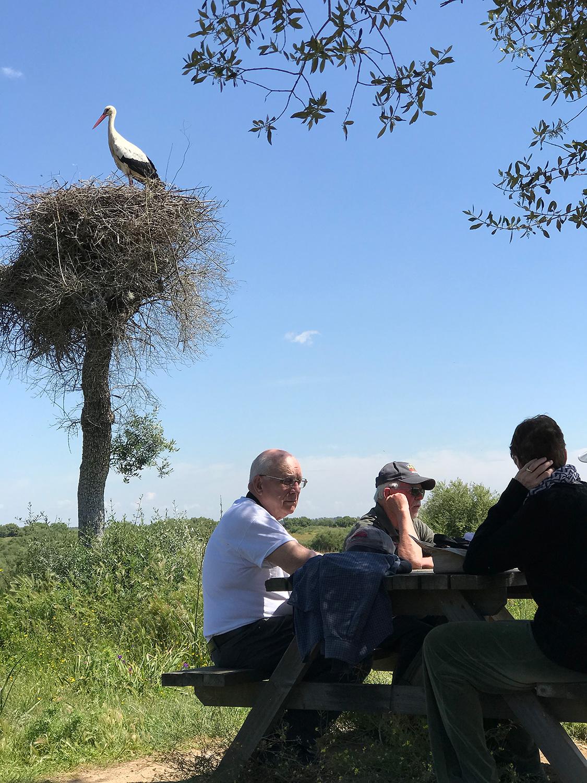stork-pic.jpg
