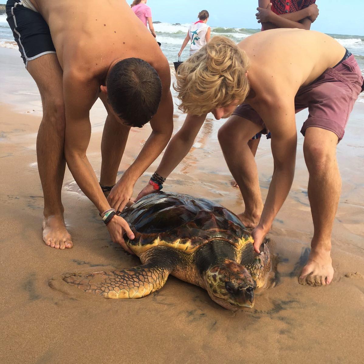 Releasing turtle.jpg