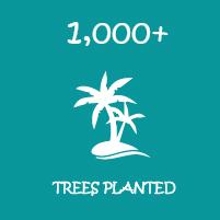 trees planted-01.jpg