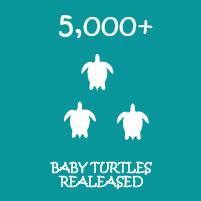 Turtles released-01.jpg