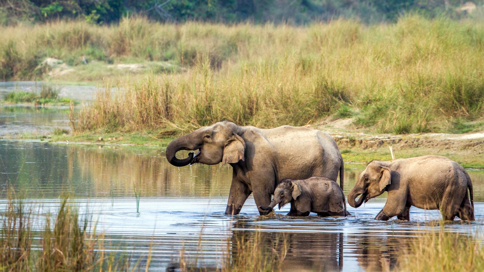 wild elephant .jpg