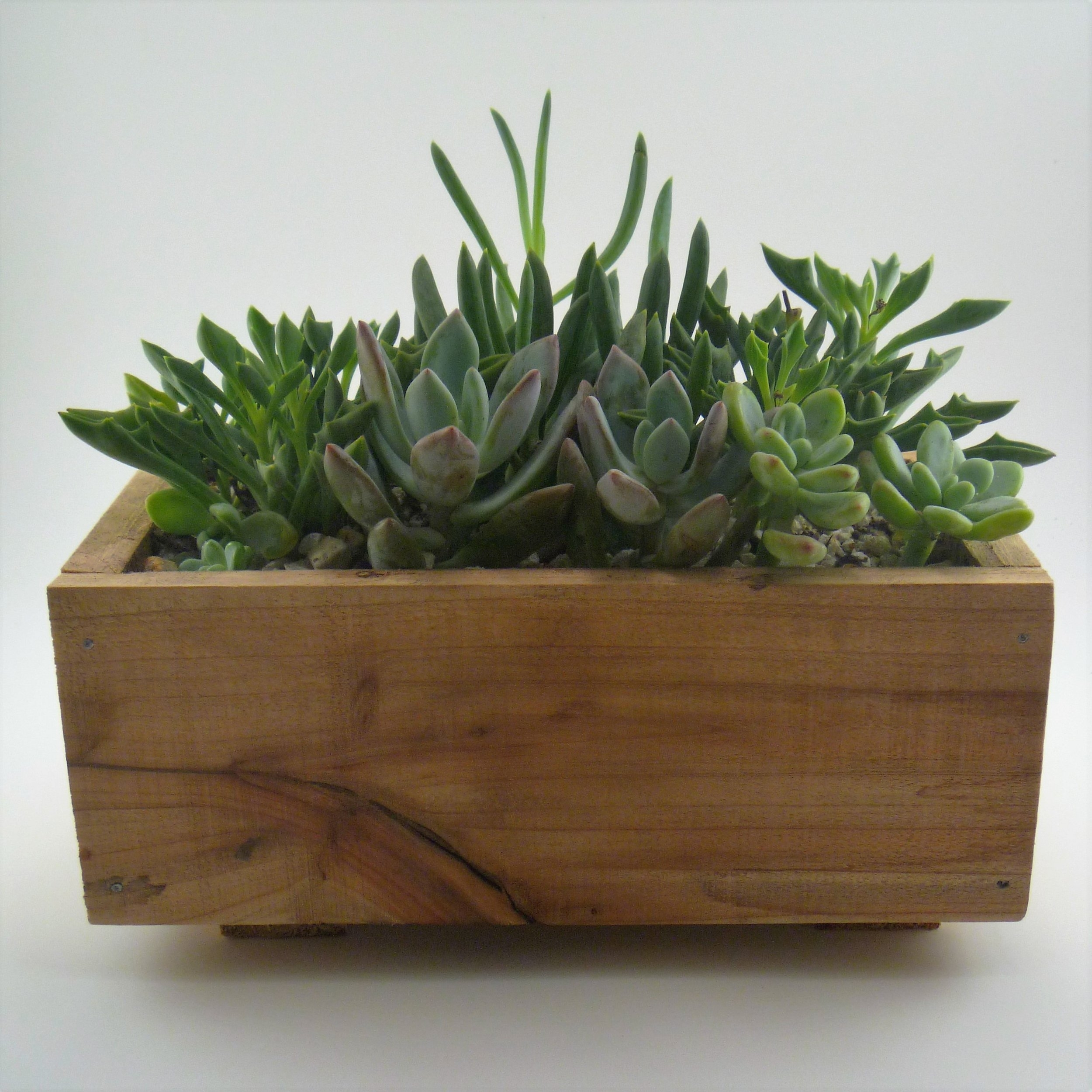 In this hands-on workshop participants will create a beautiful miniature garden in a handmade aromatic cedar box.     · $40 per participant    · Four person minimum      ·All plants, planters & other materials provided