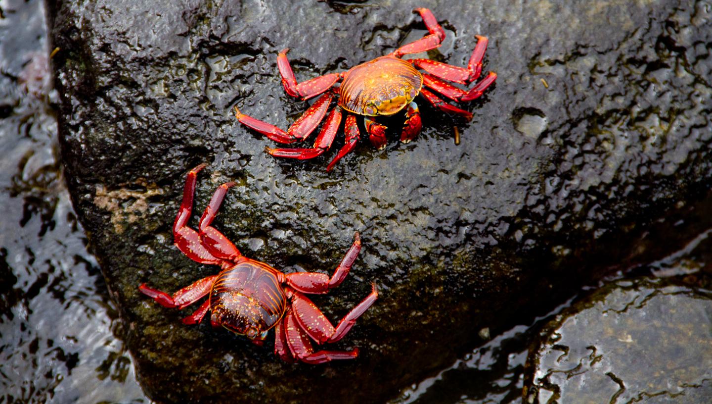 Galapagos-364.jpg
