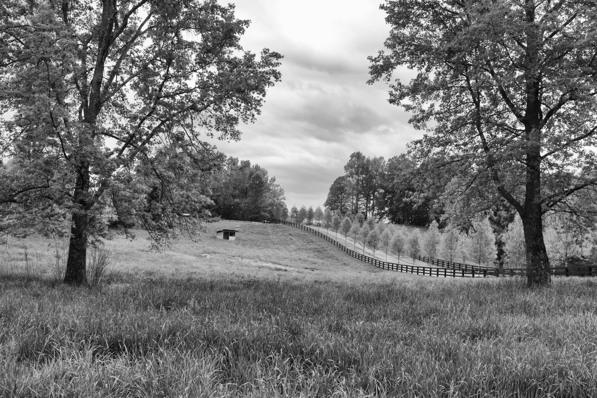 Ridgeback Farms