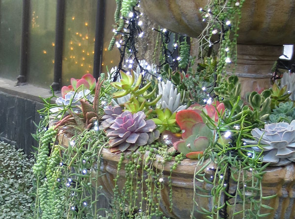 A succulent fountain with lights in the Desert Room.