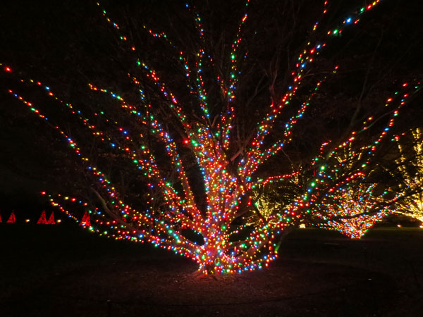 Trees are covered in lights throughout the gardens.