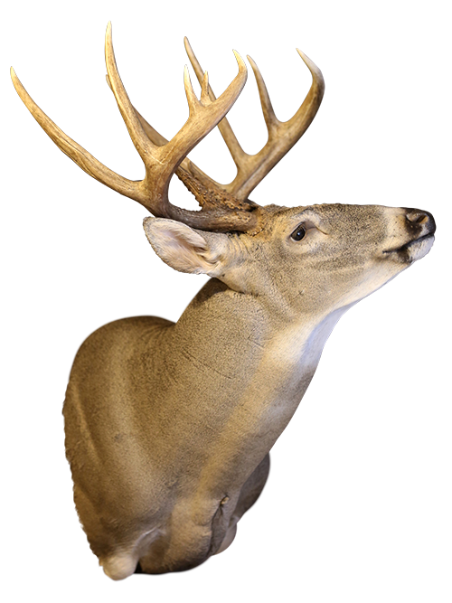 Hunting, Fishing, Meat Processing, & Taxidermy -