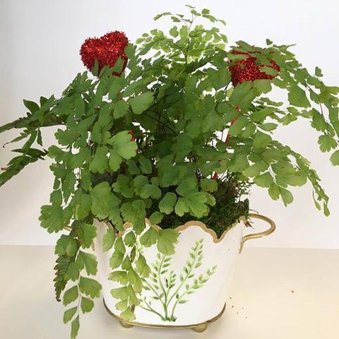 Marilu's Plant.jpg