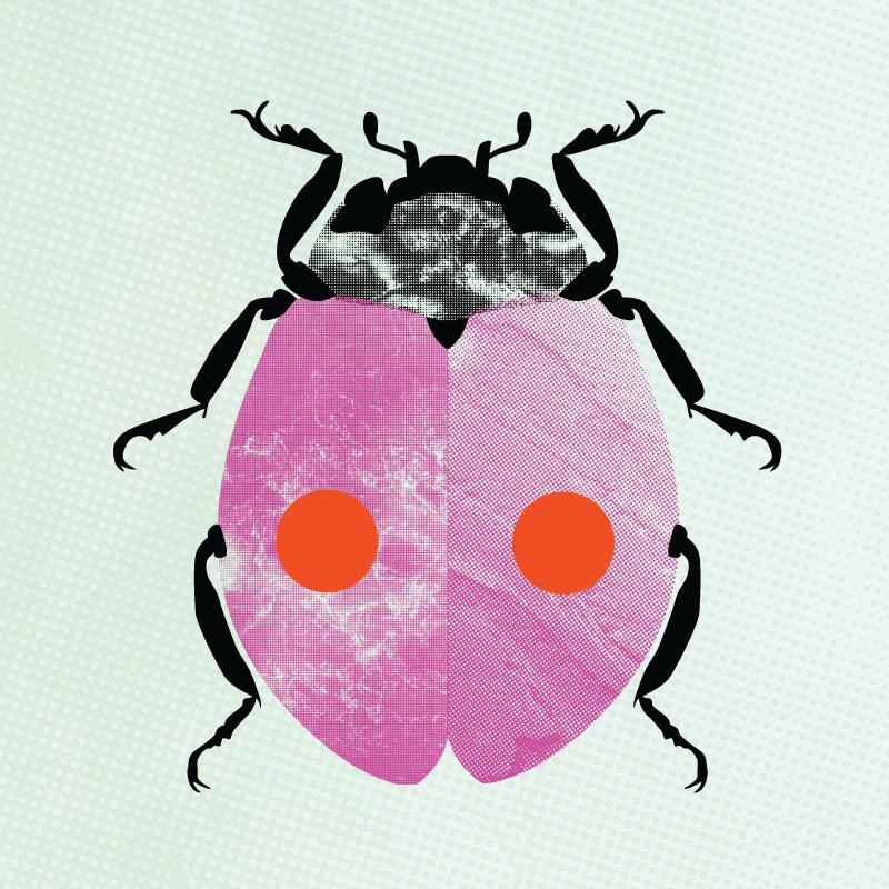 web_earthfest_bug.png