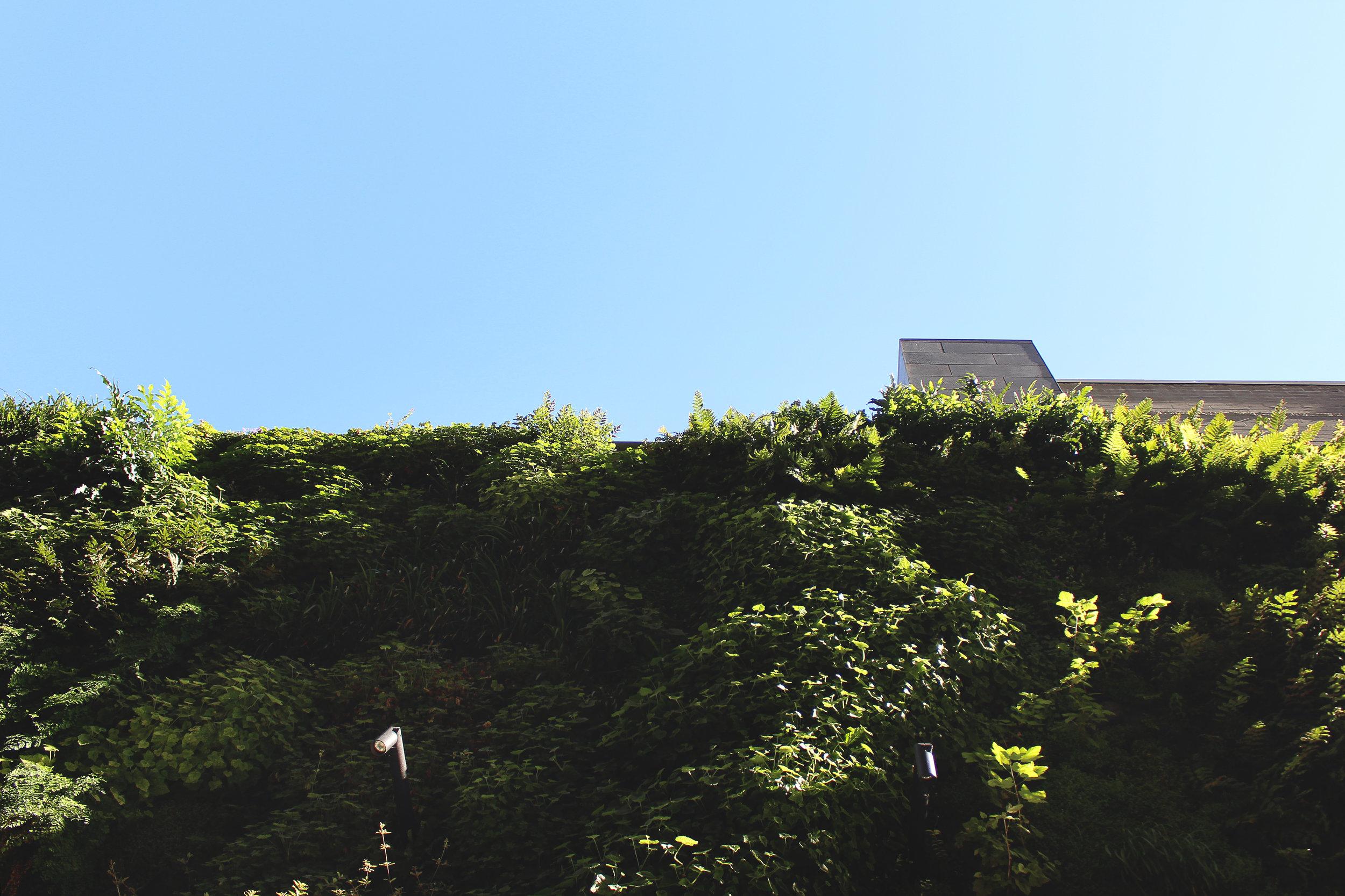 The Living Wall at SFMOMA