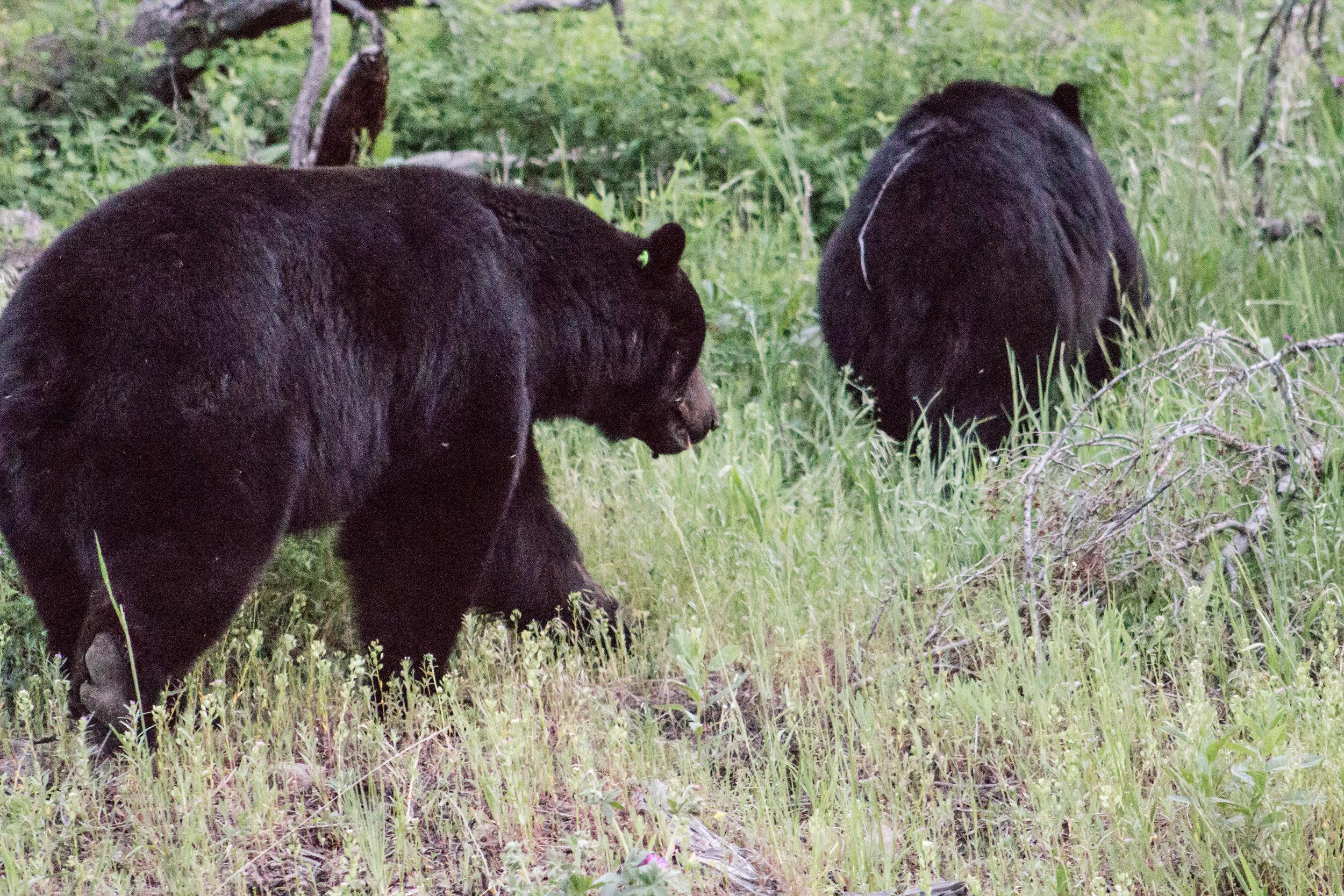 Yellowstone-111.jpg