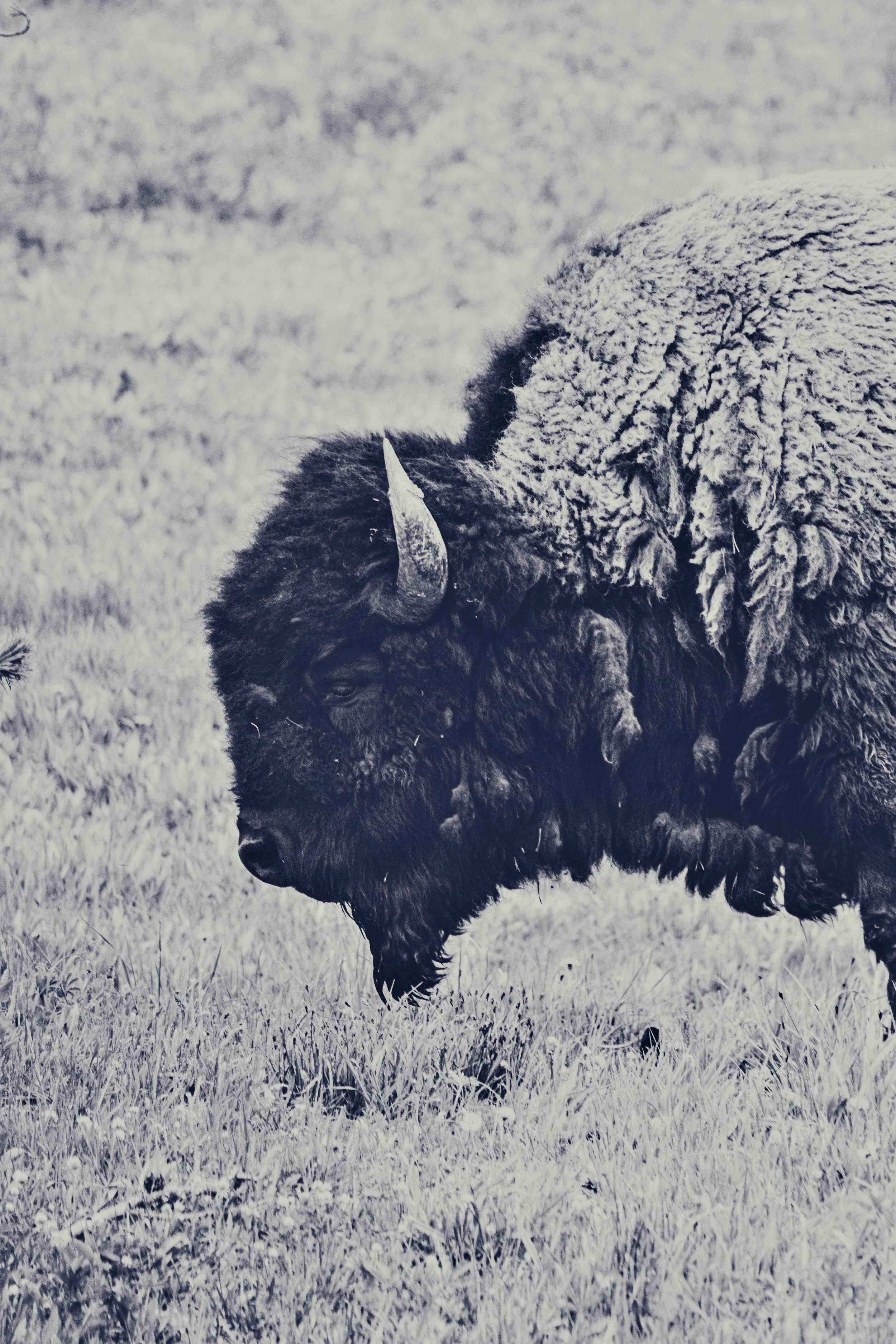 Yellowstone-146.jpg