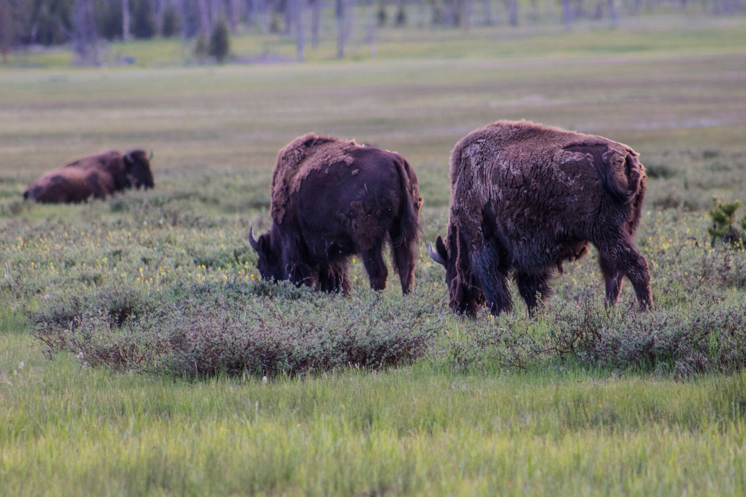 Yellowstone-102.jpg