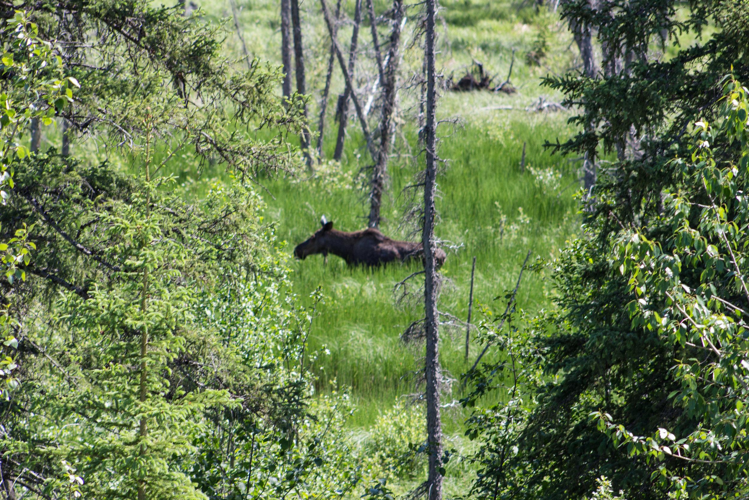 Banff and Alaska Highway-57.jpg
