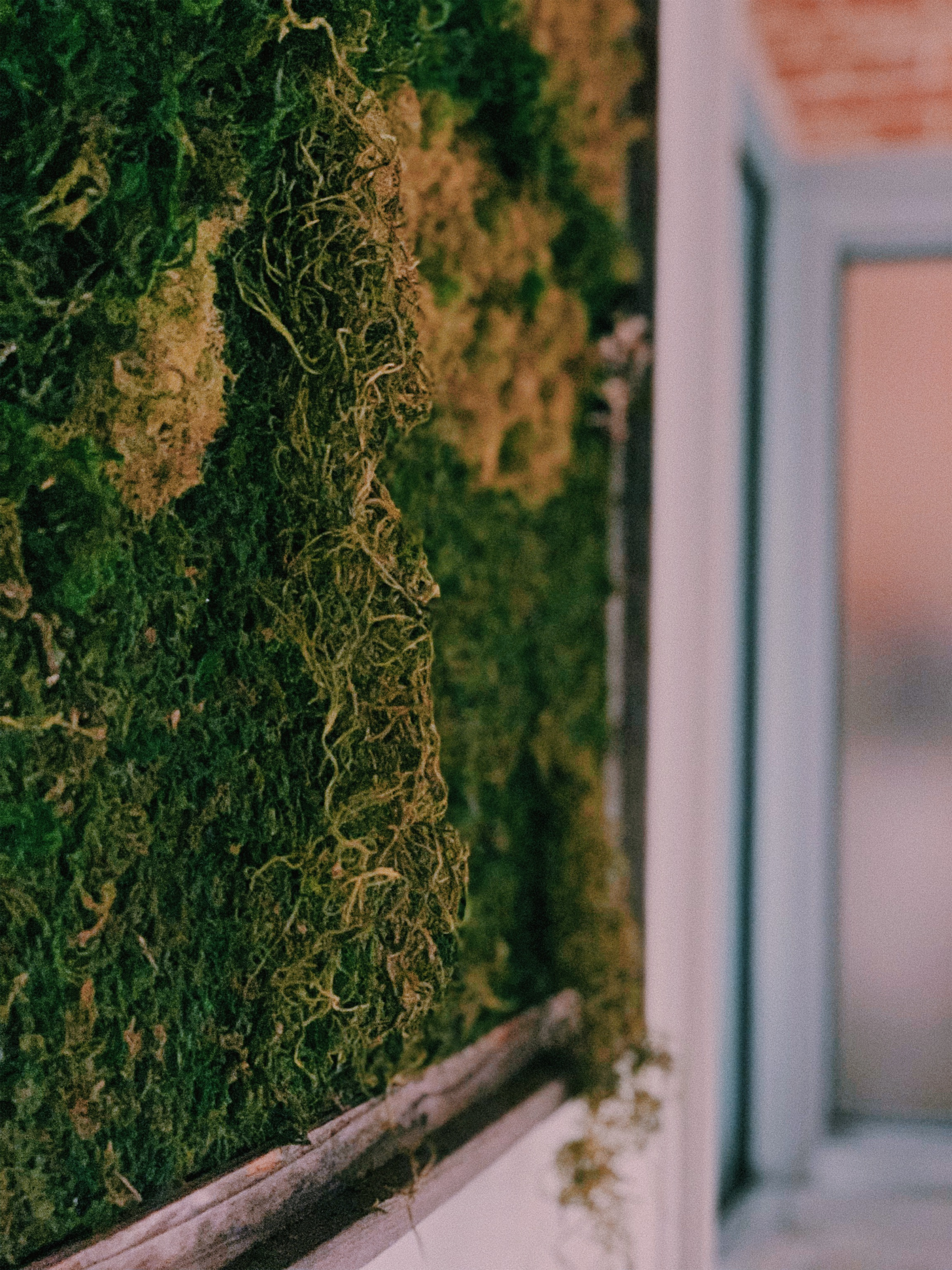 This is our moss wall art. We made it using preserved moss and a driftwood frame from Hobby Lobby.