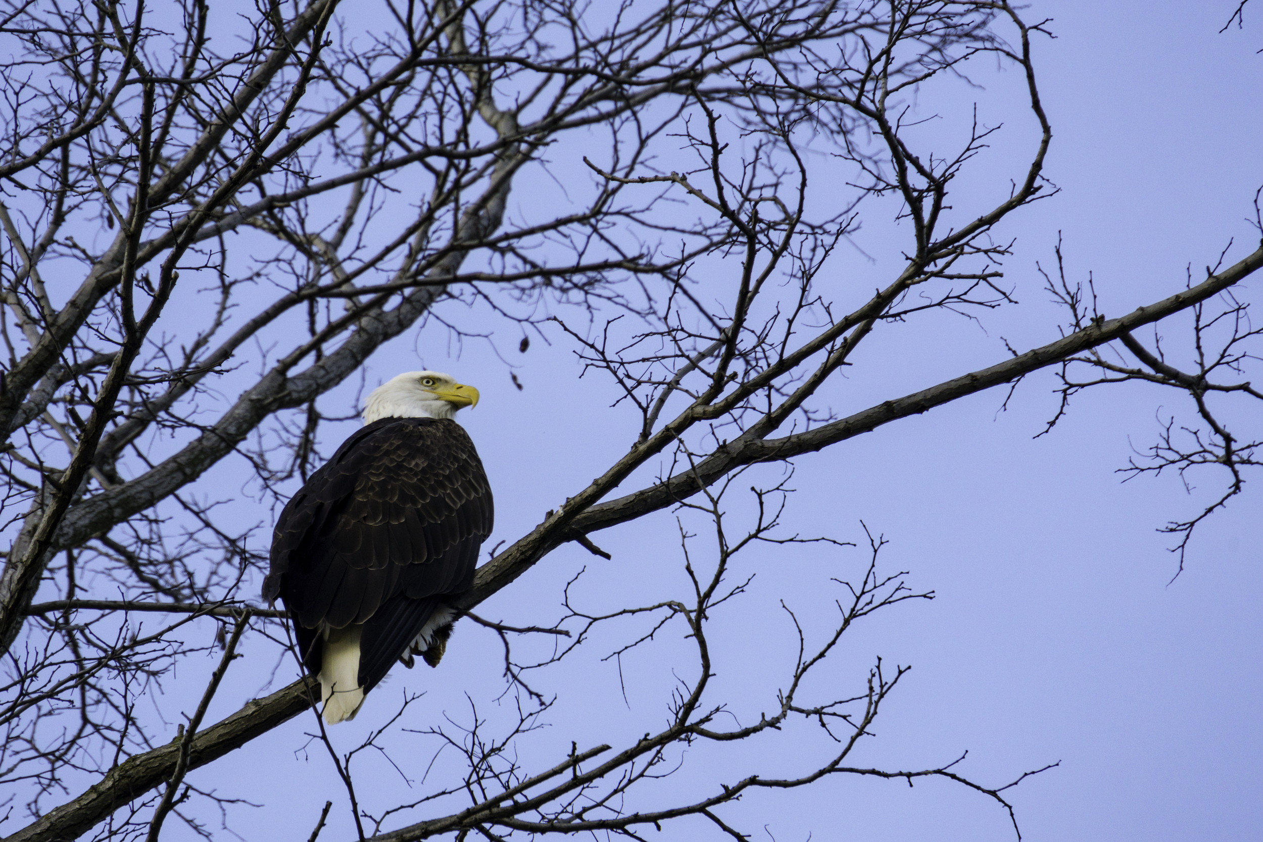 #seattle #eagle #pnw #gasworkspark
