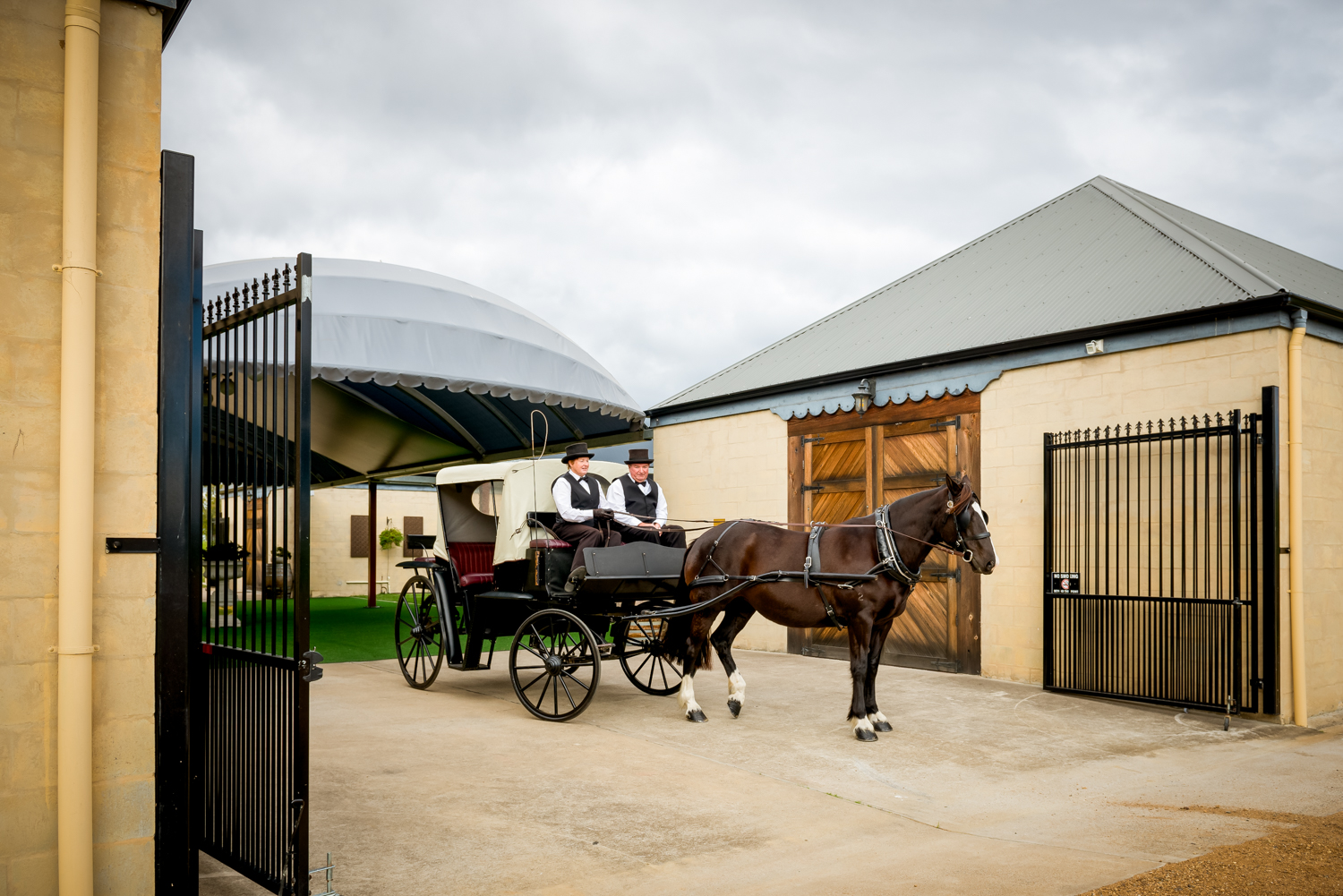 Horse and Carriage at Calvin Estate